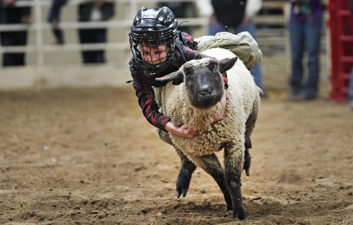 Kinderen rijden op de rug van een schaap bij de Rodeo-wedstrijd 'Mutton Bustin' tijdens de Nationale Western Stock Show in Denver. De kinderen grijpen zich vast aan de vettige wol van het schaap en moeten zo lang mogelijk blijven hangen. Het kind dat wint ontvangt een vaantje. Foto Rick T. Wilking