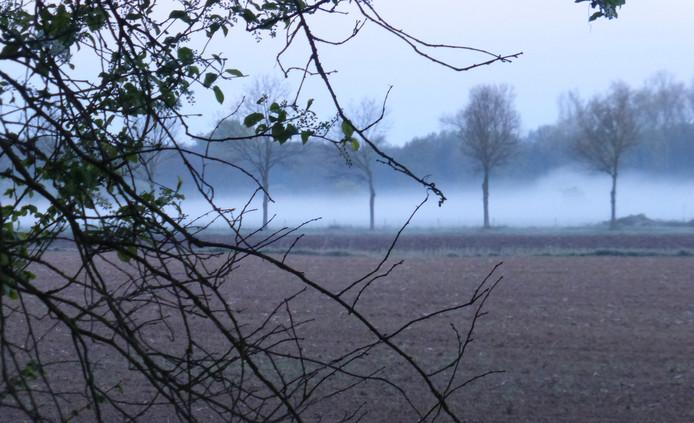 IVN Bakel, Milheeze en De Rips brengt op Koningsdag een bezoek aan natuurgebied Tongelaar in Mill.