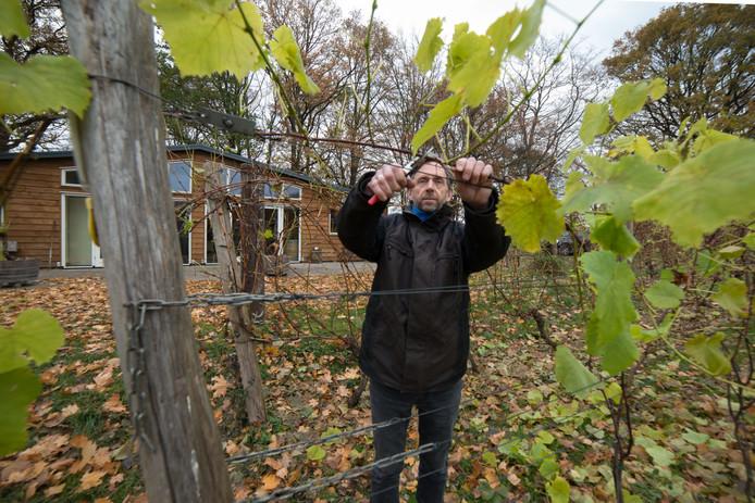 Henk Breugem begon zijn wijngaard in 2003 met één hectare.