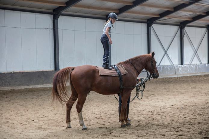 Op het ponykamp bij manege De Boschhoeve in Soerendonk komen in de vakantie elke week circa veertig kinderen.
