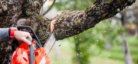 Vergunning aangevraagd  voor kap 113 Deurnese bomen