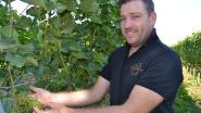 Thuis-fans opgelet: bij Petrushoeve proef je straks officiële Thuis-wijn Feniks