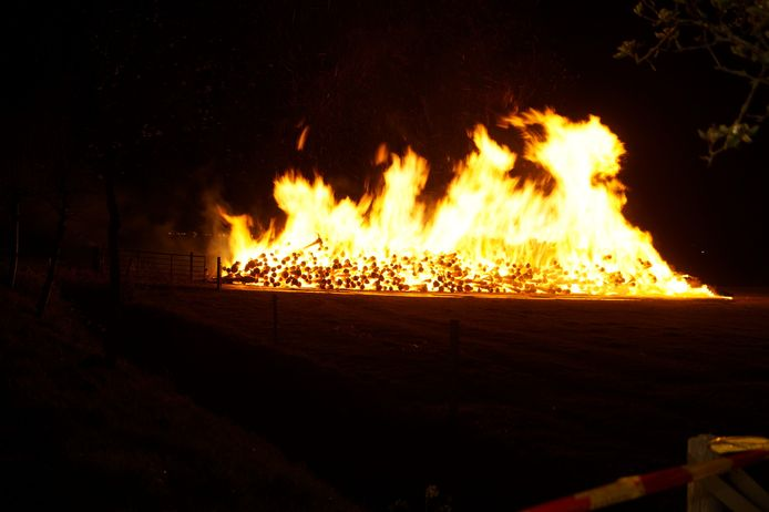 De stapel boomstammen vatte dinsdagavond vlam.
