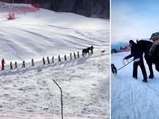 Des chevaux à la place des remontées mécaniques: la bonne idée d'une station de ski en France