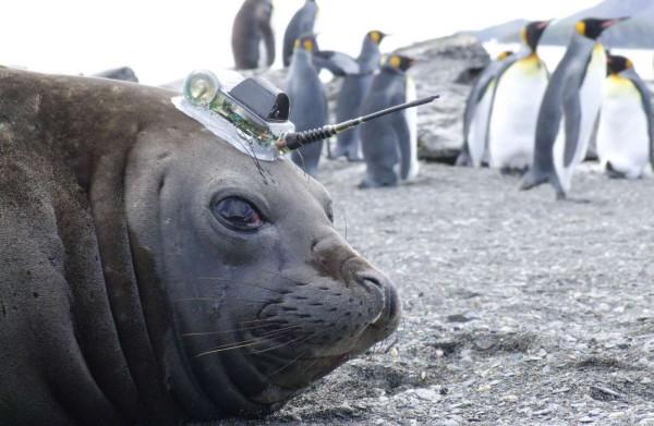 Door zijn antenne kunnen we ook in de winter zeetemperaturen meten