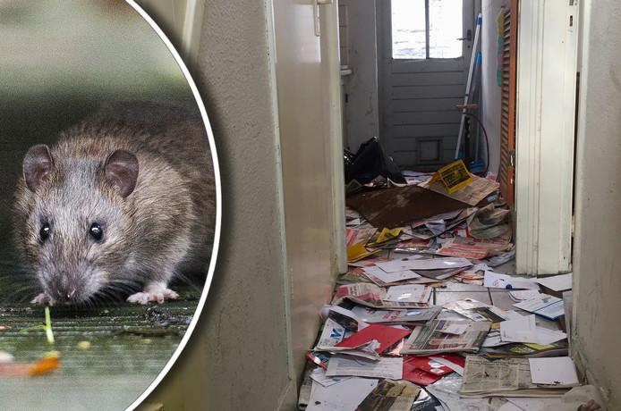 Verlaten monumentaal pand aan de Schutterstraat in Utrecht blijkt half opgegeten door ratten.