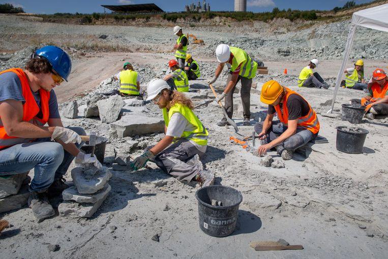 Paleontologen doen onderzoek in de steengroeve bij Winterswijk. Ze zoeken naar fossielen van miljoenen jaren oud.  Beeld 30-7-2019 Kotten