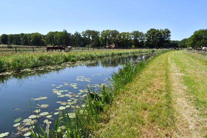 De berm naast de Buurserbeek werd in juni door het waterschap stevig gemaaid tijdens het broedseizoen.
