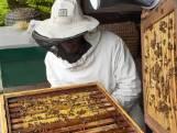 De Moestuin In: de bloemetjes en de bijtjes