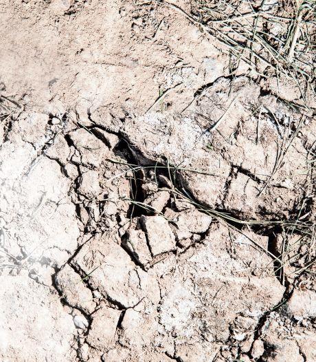 Talloze problemen door droogte in Gelderland: van verzakkende huizen tot minder libelles