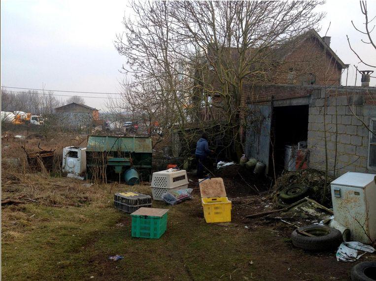 Op dit terrein vonden de dierenorganisaties en de politie tientallen kadavers.