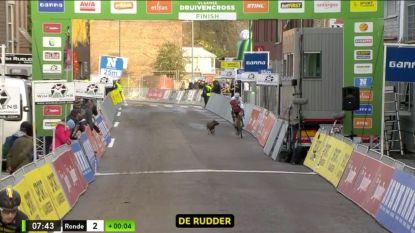 """Loslopende viervoeter crost even mee met Van der Poel en co: """"Het was nog een mooie hond ook"""""""