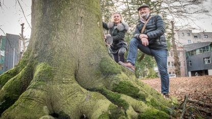 'Meer bomen in Roeselare' wil bomen ACV-site redden via alternatief bouwplan