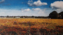 Vruchtbaar plateau met bloemen aan de noordoostkant van Rucphen, het gaat over in een lager gelegen deel. Al die verschillen in hoogte en bodemgesteldheid zijn in kaart gebracht in de nieuwe archeologienota.
