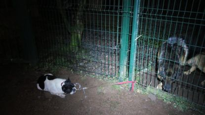 Verwaarloosd hondje vastgebonden aan hek  van asiel: doodsbang van waakhond,  uitgeput en onderkoeld