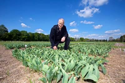 Heilige Driehoek krijgt proefvelden met tulpen en tropische gewassen
