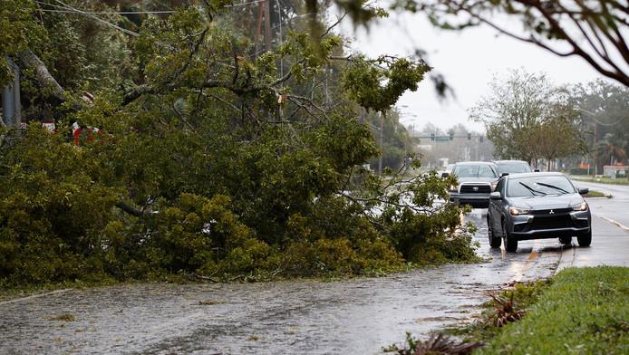 Omgevallen bomen in Florida.