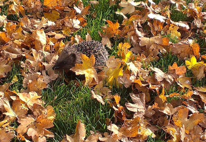egeltje geniet van de herfstzon