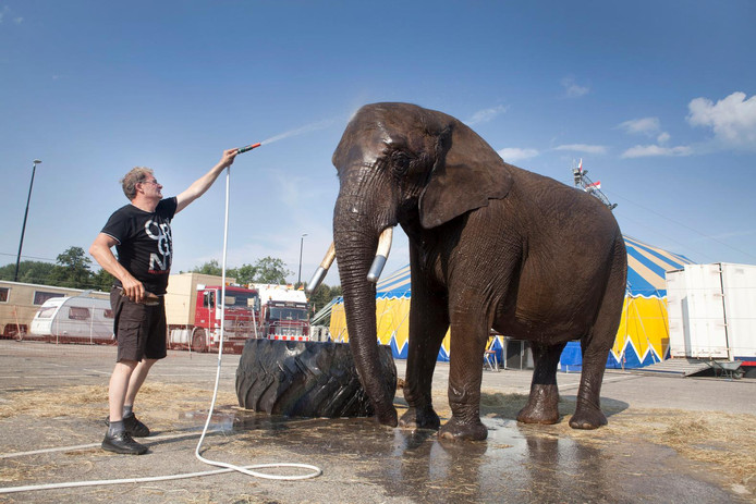 Directeur Lutz Freiwald verzorgt olifant Buba.