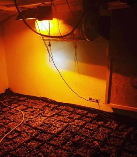 Hennepkwekerij met 255 planten ontdekt en geruimd in Heijen