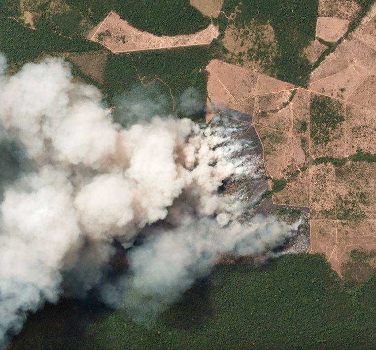Satellietbeelden van branden in de Braziliiaanse staat Para.  Beeld AFP / © 2019 Planet Labs, Inc