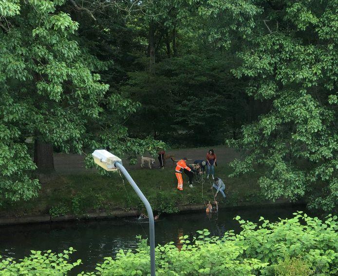 Omstanders trekken met hulp van een touwladder op 9 juni een vrouw uit Kanaal-Zuid waar ze was ingevallen bij een poging om haar hond uit het water te redden.