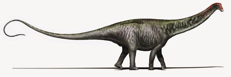 Zo heeft de Brontosaurus er volgens huidige paleontologen uitgezien Beeld Davide Bonadonna