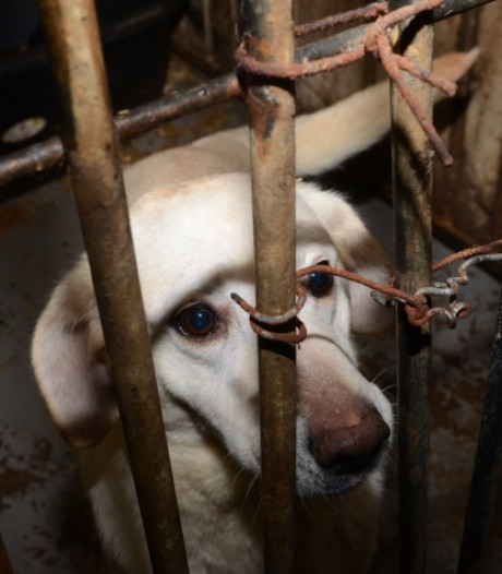 Onderzoek naar omstreden fokker bij wie 100 honden zijn weggehaald
