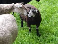 Kinderboerderij Nijverdal gaat open voor bezoekers