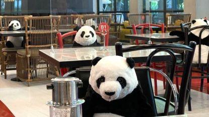 Veilig en toch met gezelschap tafelen? Restaurant zet panda's op stoelen