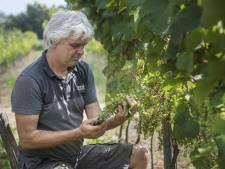 Droogte geen probleem voor wijnboer uit Bentelo