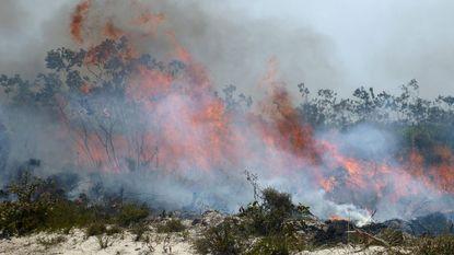 Natuurbranden in Australië door extreme hitte