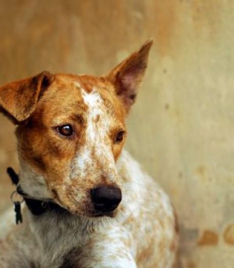 Broodmagere honden Tari en Mitra leefden op betonnen garagevloer van Arnhemmer