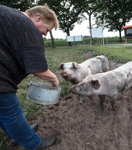Beuningen krijgt onderzoekscentrum voor varkensvoer