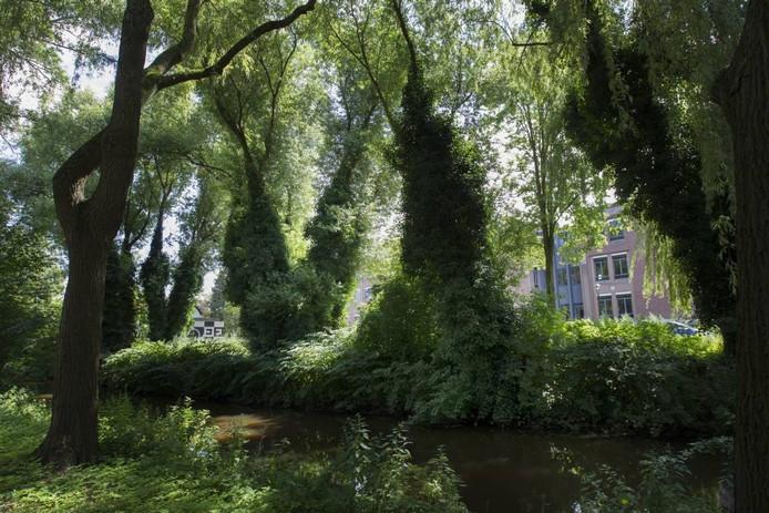 Ongeveer op deze plek komt het nieuwe Dommelbruggetje. foto Kees Martens/Fotomeulenhof