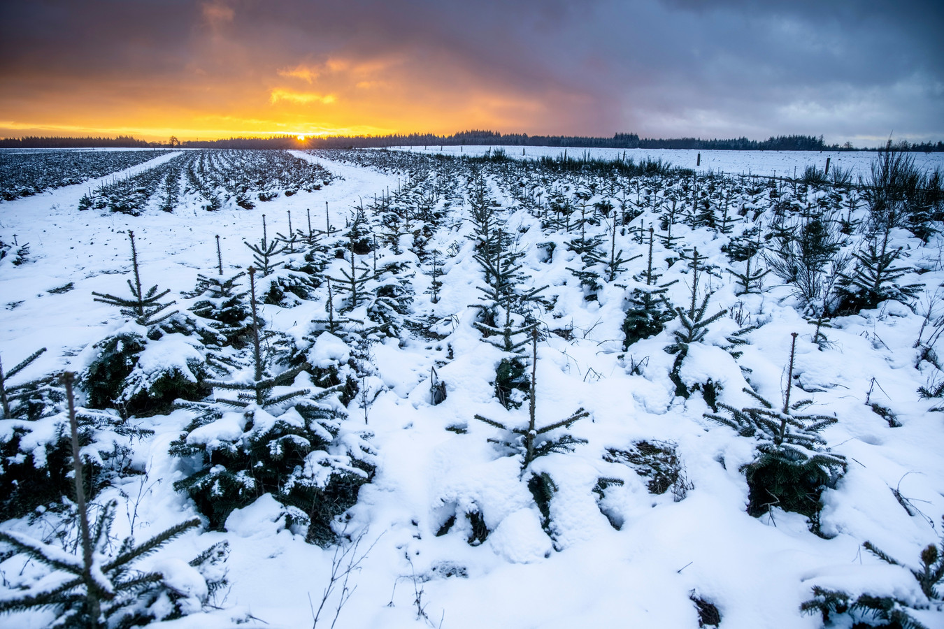 Sneeuwlandschap in Bertrix, België.