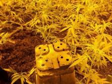 Wietplantage in woning Eemnes ontmanteld