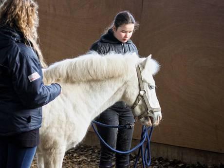 Hulphond Nederland geeft nu ook therapie met... paarden