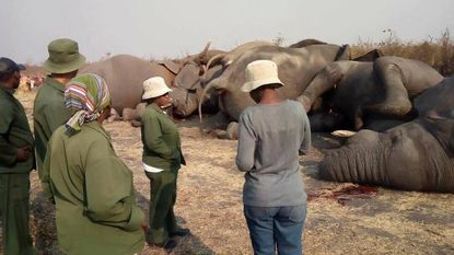 Kudde olifanten geëlektrocuteerd tijdens zoektocht naar drinkwater