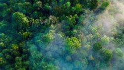 """""""Massale wereldwijde bebossing kan decennium CO2-uitstoot neutraliseren"""""""
