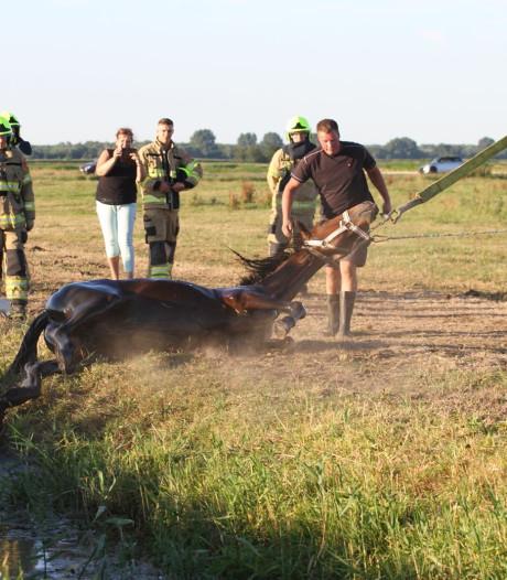 Brandweer redt paard uit water in Nijkerk