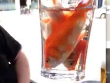 Caféverbod voor man die op terras glas goudvissen opdrinkt: 'Ik walg hiervan'