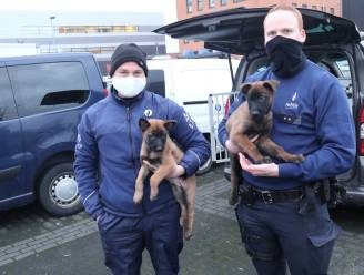 """Politiezone Arro Ieper trekt resoluut de kaart van hondengeleiders, met Jack en Bolt als speurneuzen in opleiding: """"Onze kinderen kozen trouwens hun namen"""""""