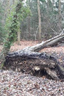 We kunnen weer veilig wandelen en fietsen in de Veluwse bossen