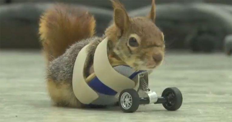 Karamel de eekhoorn