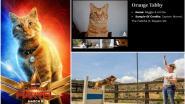 Animals of Hollywood: het modellenbureau dat alle dieren in de filmwereld vertegenwoordigt