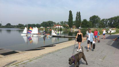 Hondenbaasjes wandelen rond de Plas voor het goede doel
