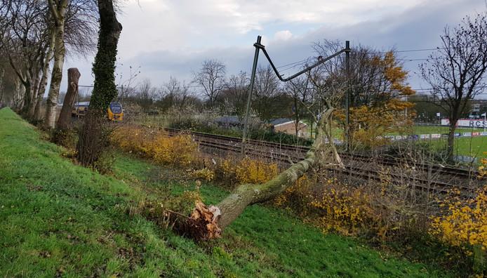 Een omgevallen boom lag dwars over het spoor. Links de trein.