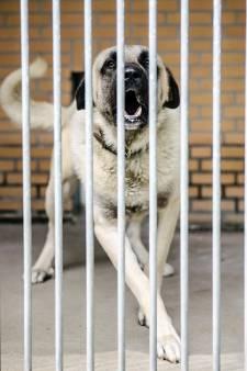 Geldboete voor verwaarlozing broodmagere honden Tari en Mitra