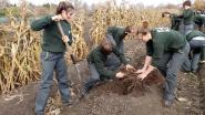 Leerlingen PTS oogsten vreemde teelten als yacon
